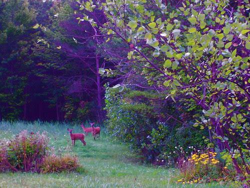 Backyard in early morning