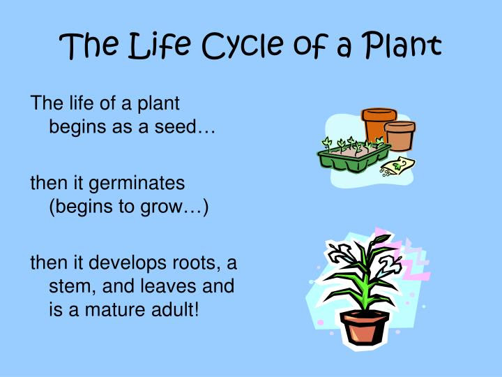 the life cycle of a plant n