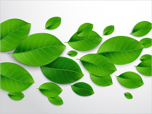 Realistic-Vector-Leaves-Illustrator-tutorial
