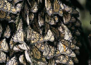 'Efecto mariposa contra el hambre'