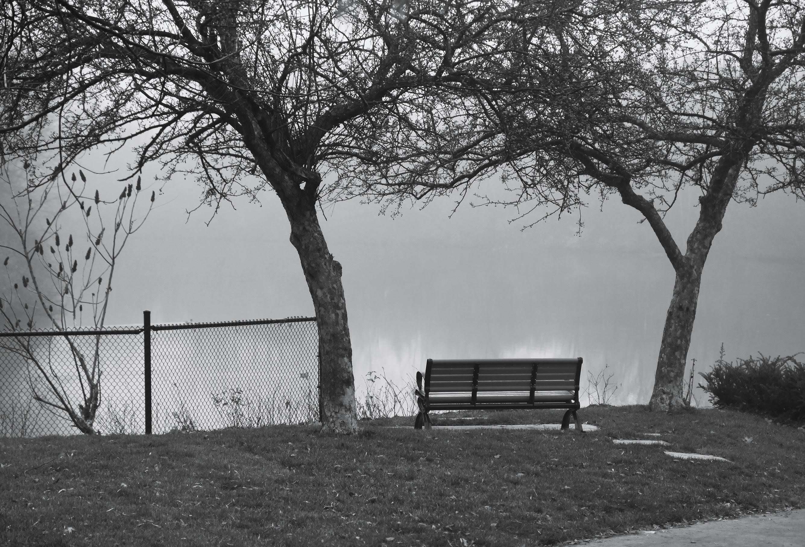 foggy day bench