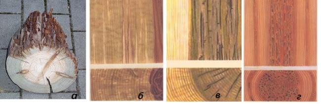 Естественные пороки древесины, гнили древесины