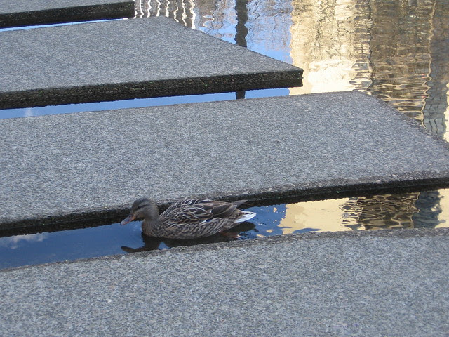 duck, lovejoy fountain