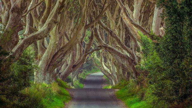 The Dark Hedges | Northern Ireland