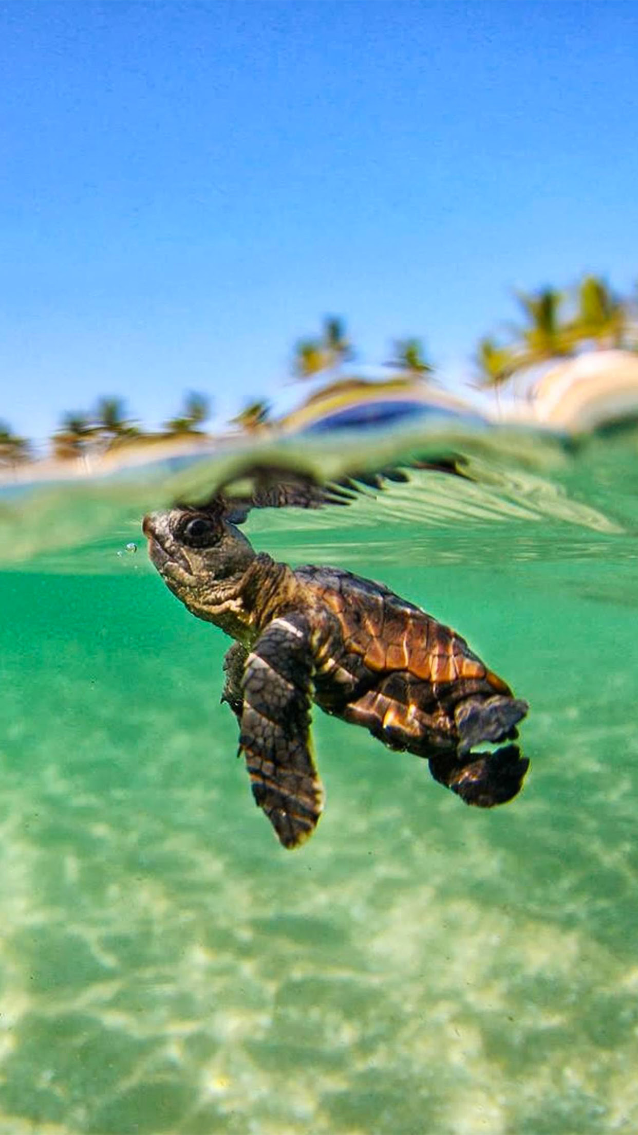 Turtle Lagon Wallpaper For Iphone X 8 7 6 Free Download On