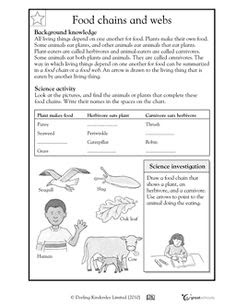 12 Best Images of Worksheets Food Chain Web Pyramid - Food ...