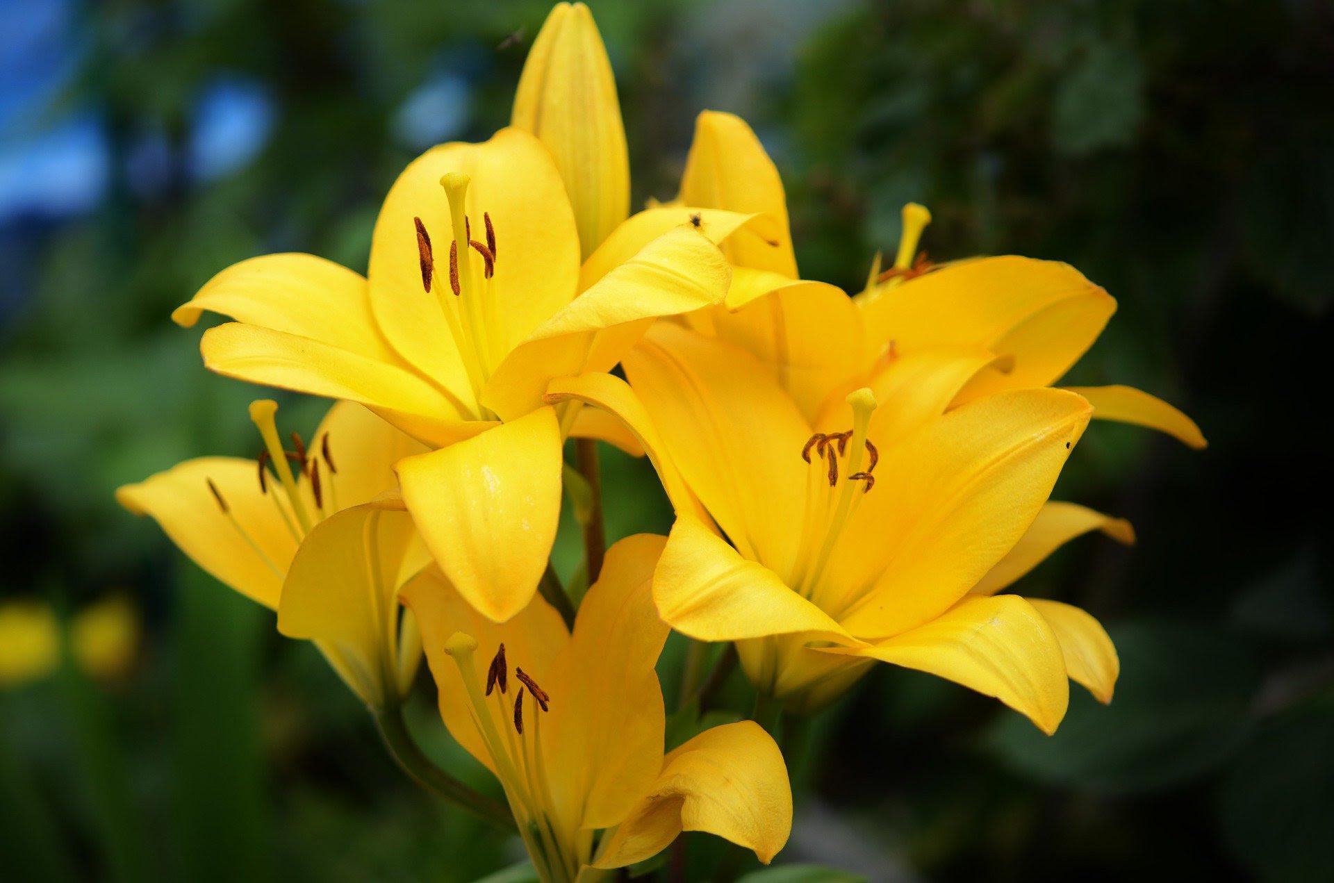 O Significado Das Flores Que Flor Significa O Quê Like3za