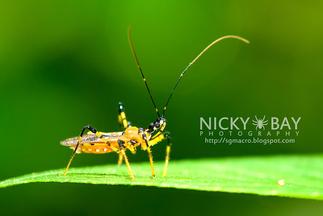 Assassin Bug (Reduviidae) - DSC_5398