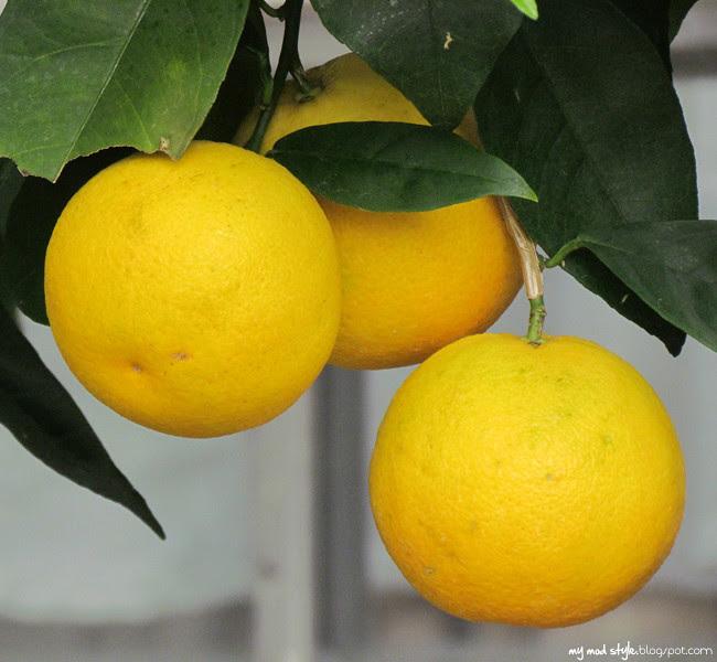 krohn fruit