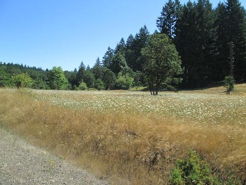 Summer roadside wildflowers