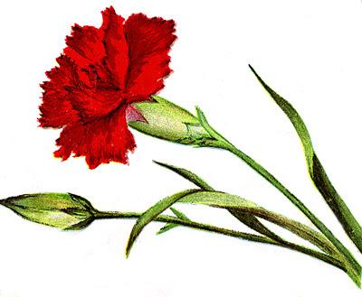 flower clip art borders. flower clip art borders. in