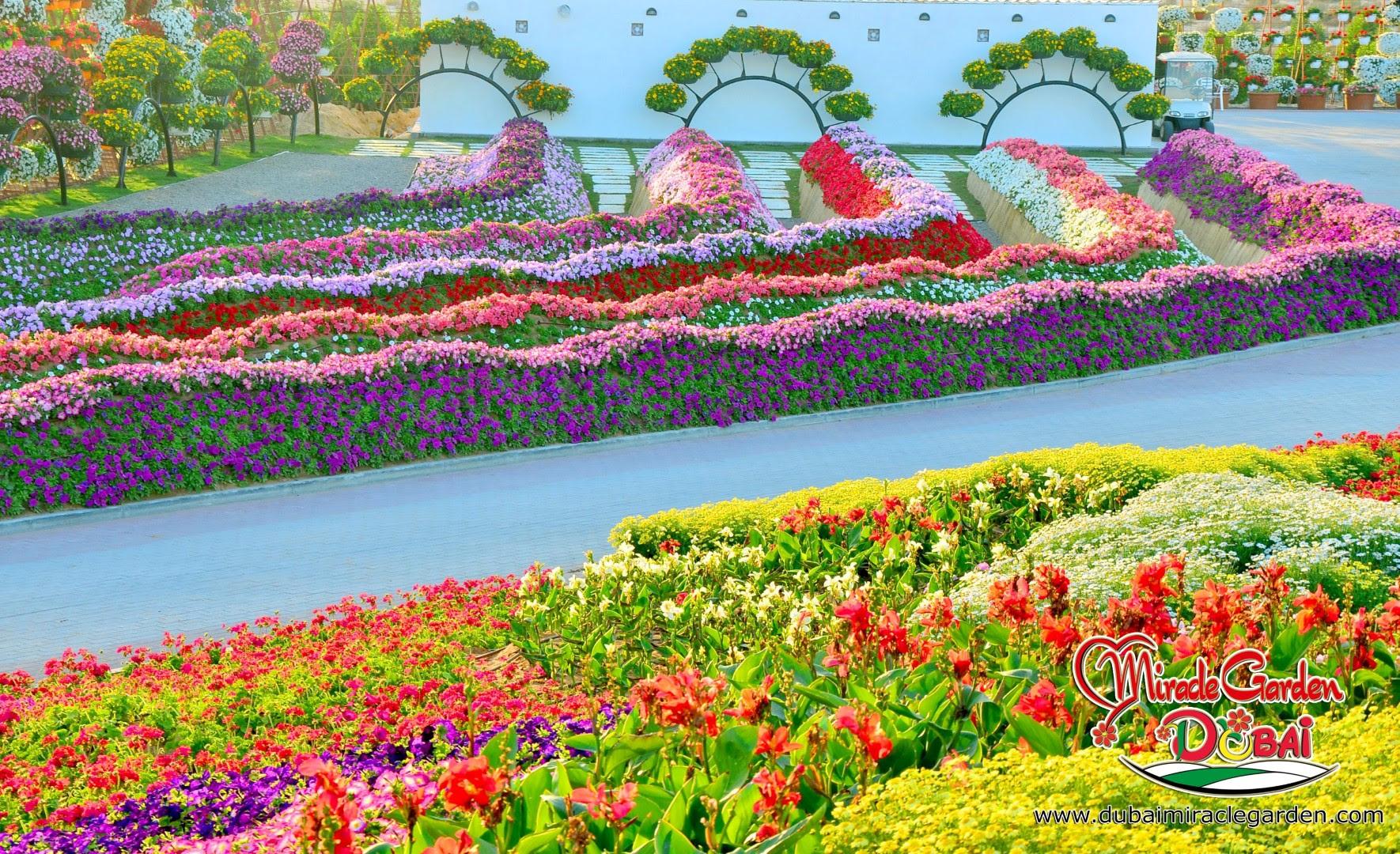 Dubai Miracle Garden 05
