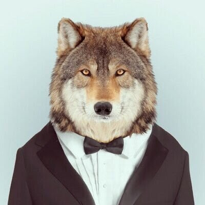 The Meaning And Symbolism Of The Word Wolf