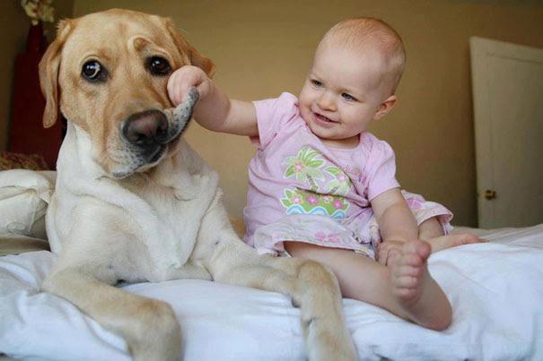 Σκύλοι: Οι καλύτεροι φίλοι του ανθρώπου | Otherside.gr