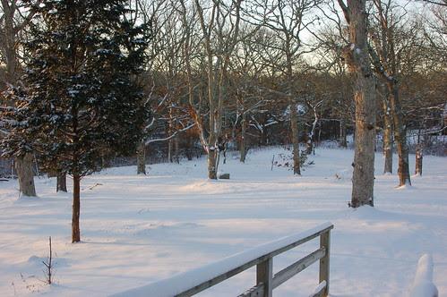 morning snow.JPG