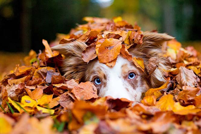 Eκπληκτικές φωτογραφίες ζώων που απολαμβάνουν το Φθινόπωρο (14)