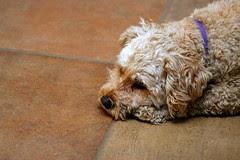 Ralph being all sad