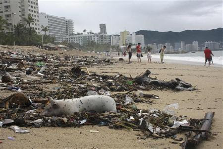 A dead pig lies among debris on a beach in Acapulco September 17, 2013. REUTERS-Jacobo Garcia