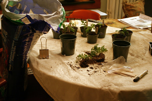 planting 028