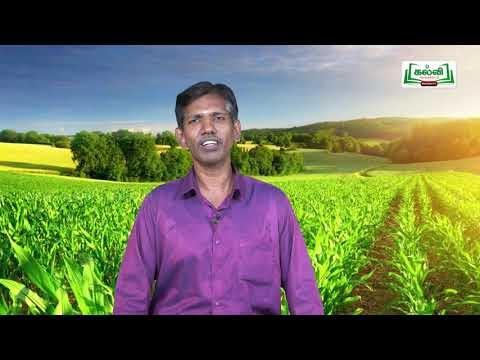யாமறிந்த மொழிகளிலே Std 11 தமிழ்  இயற்கை வேளாண்மை Kalvi TV