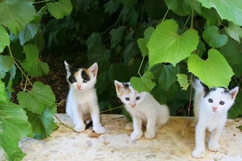 Cats groupie!