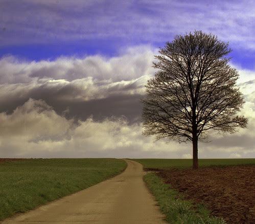 Millefeuille de ciel et arbre sans