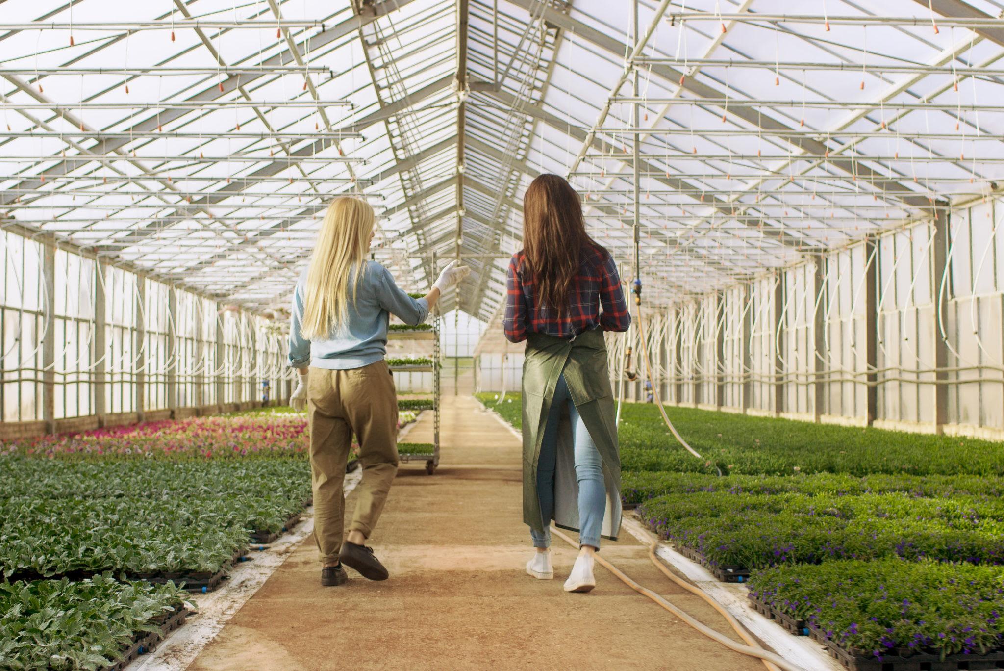 Bloom Horticulture Consultants   Landscape design studio ...