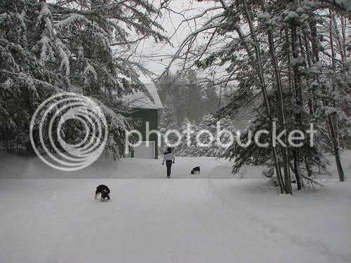Tigerhawk Family in the Snow