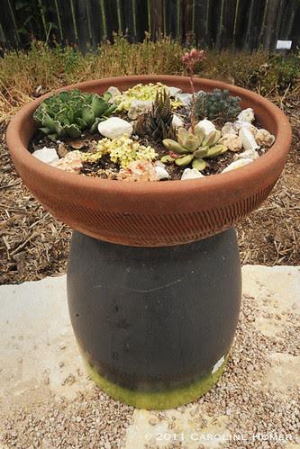 A dish of tiny succulents