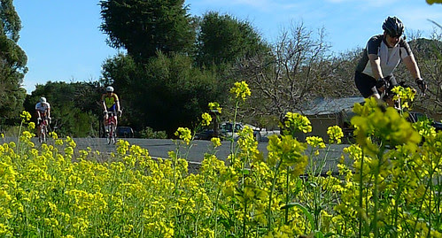 BBM Superbowl Ride_mustard