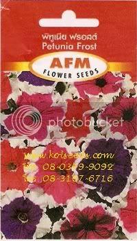 เมล็ดพันธุ์ดอกพิทูเนียฟรอสต์