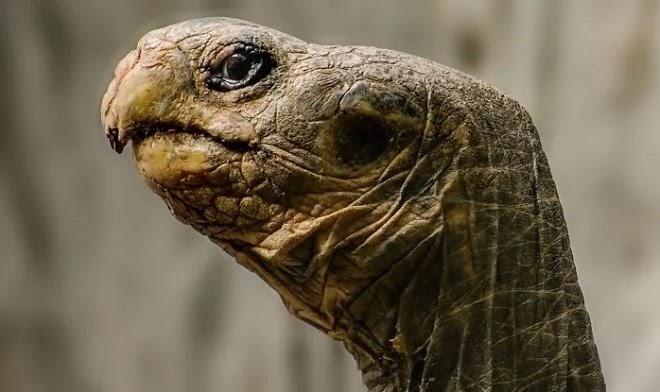 Ученые впервые засняли, как охотятся черепахи – медленно, но неотвратимо