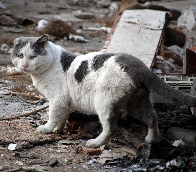 street cats 3