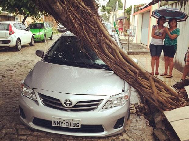 Árvore caiu na rua Julio Resende, no conjunto Morro Branco, na Zona Sul de Natal (Foto: Freire Neto/G1)