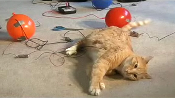 An Engineer s Guide to Cats @ Yahoo! Video