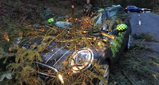 Consdorf : la tempête fait chuter un arbre sur une voiture - Le Quotidien.lu