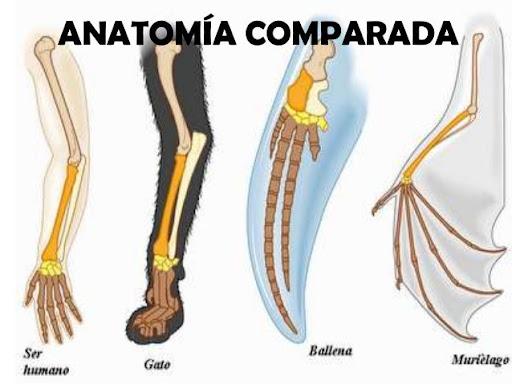 La Anatomía Comparada