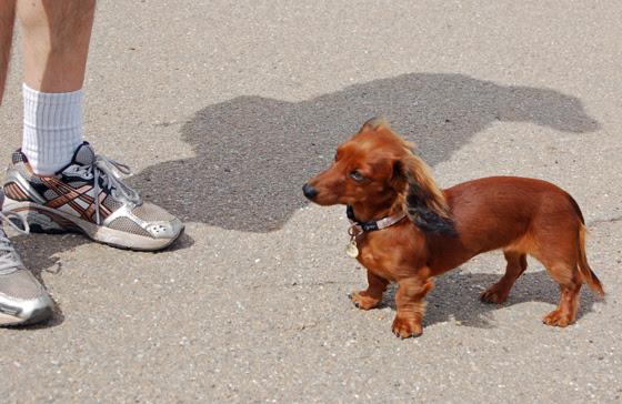 3weenie-pup.jpg