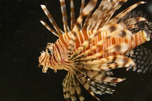fish at the National Aquarium