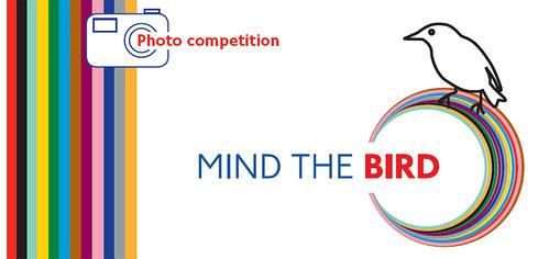 Mind the Bird