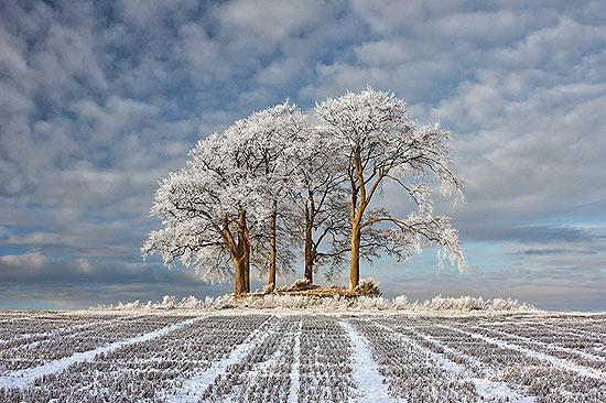 Foto de um campo com árvores cobertas de neve, na Escócia, venceu concurso britânico; veja galeria de fotos