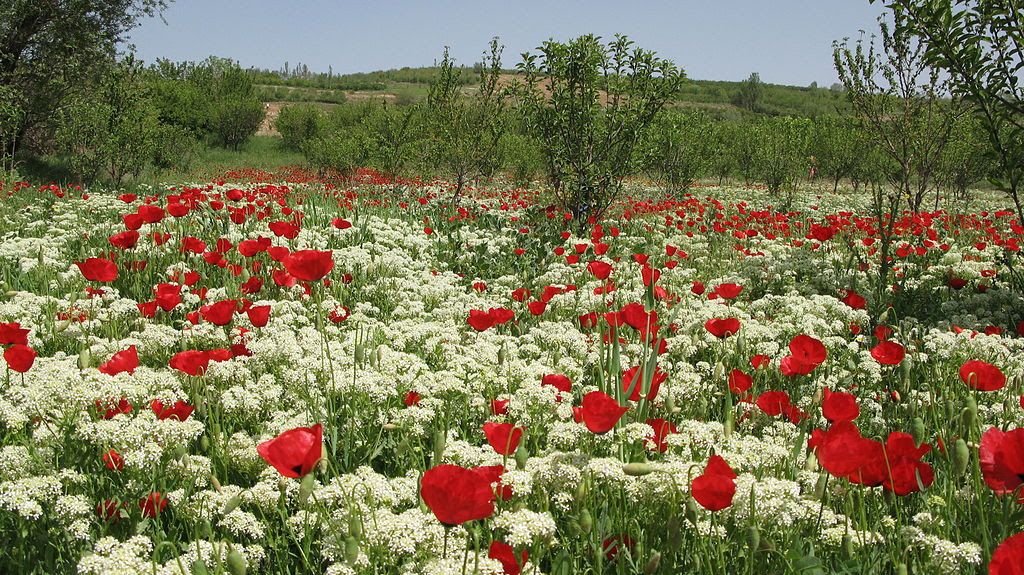 http://upload.wikimedia.org/wikipedia/commons/thumb/2/26/Boroujerd_spring.jpg/1024px-Boroujerd_spring.jpg