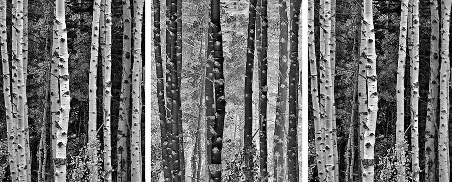 Bw Favorites Tony Hertz Black And White Landscape And Color