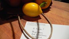 real meyer lemons