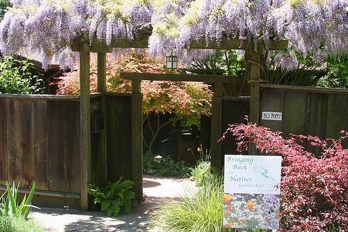 japanese-california garden