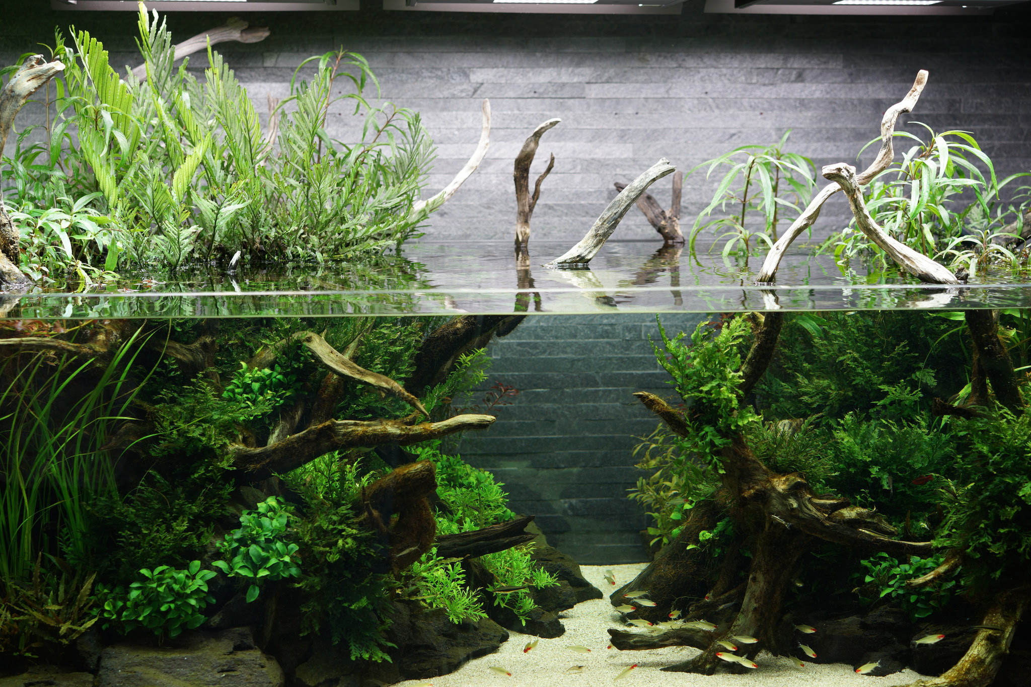 Aquascape Takashi Amano - Aquascape Ideas