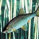 Календарь рыболова на февраль 2015, календарь рыбака февраль 2015, календарь клева рыбы февраль 2015, клев рыбы в феврале, лунный календарь рыболова на февраль 2015, какая рыба клюет в феврале, ловля щуки в феврале, ловля окуня в феврале, ловля налима в феврале, ловля судака в феврале, ловля рыбы в феврале, как ловить рыбу в феврале, рыбалка в феврале