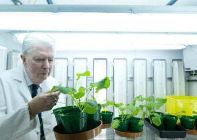 Professor Cocking in the growth room. Credit: The University of Nottingham