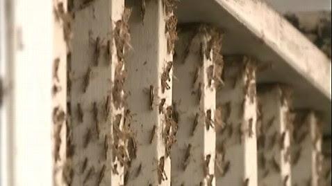 abc locusts kb 120613 wblog Plague of Locusts Hits California Town