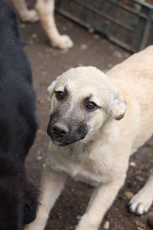 Sally – 5 month old female Cross-Breed